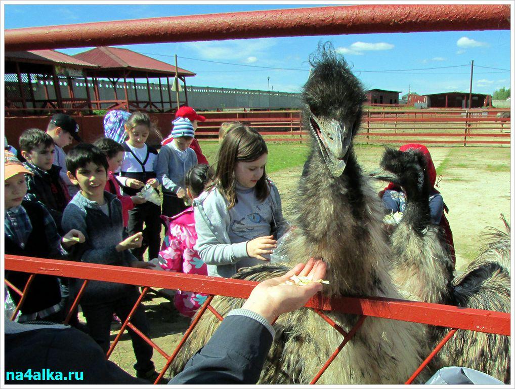 Экскурсия на страусиную ферму.
