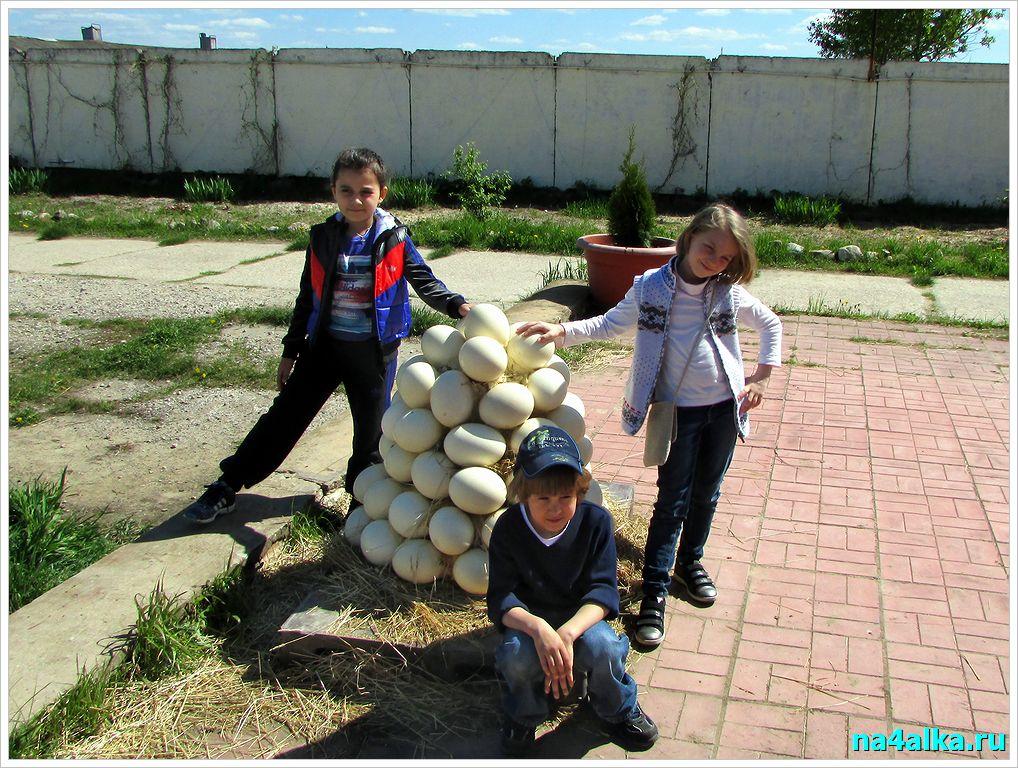 Экскурсия на страусиную ферму. Страусиные яйца.